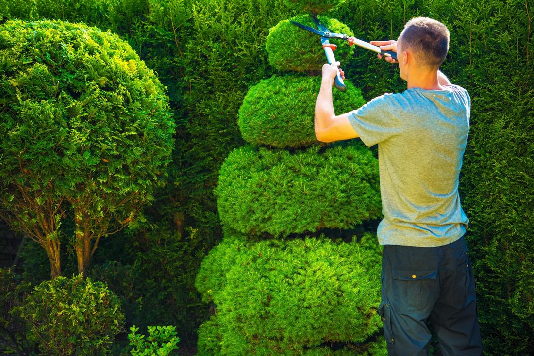 Hedge trimming henderson