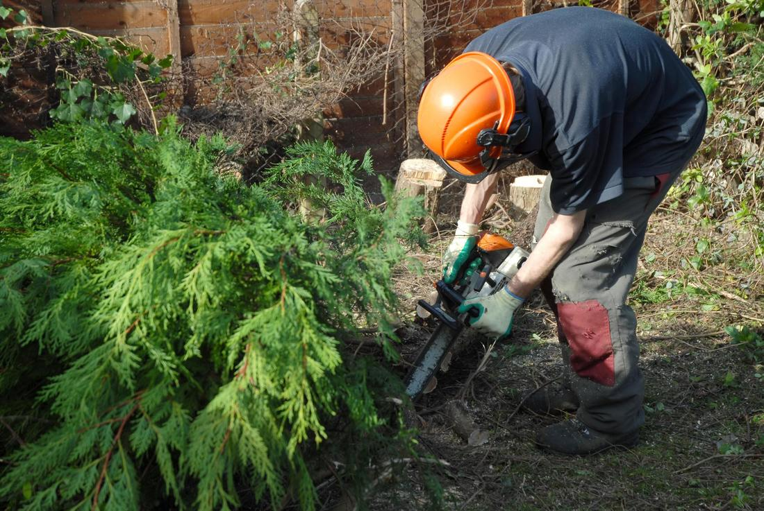Tree lopping West gate