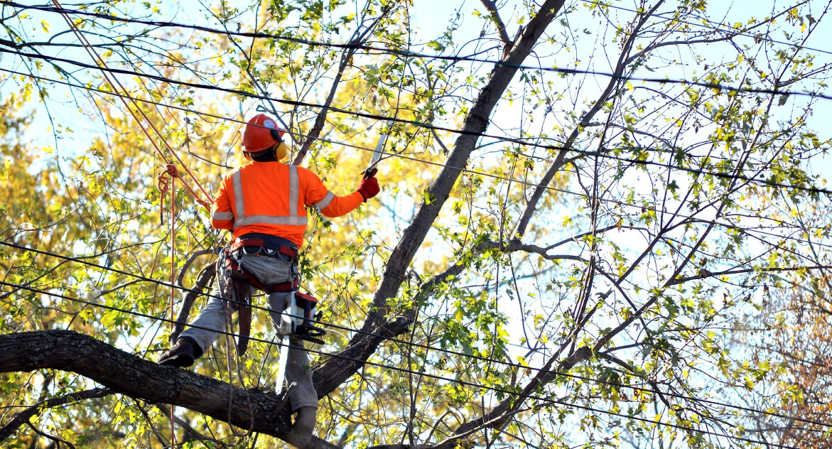 Tree removal west auckland