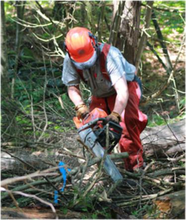 west auckland Arborist services
